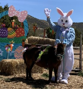 Easter Bunny and Horse